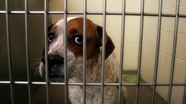 Dog Kennels Woolwich