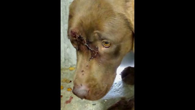 Central Utah Wag N Train Dog Rescue