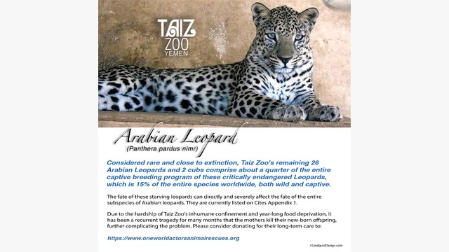 Wild Safari faune Jaguar Safari Ltd Animal educational kids toy figure