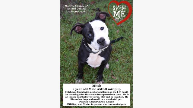 MITCH ABD At Monroe Co GA Animal Control By Partners For Pets Inc