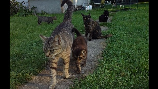 c63749ab6fb8 Animal Lover Needs HELP w  Feral Cat Colony by Celestial FireKitty
