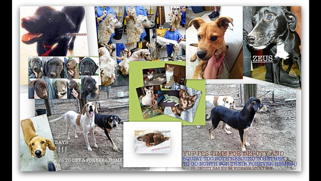 Helptransport 17 Rescue Dogs Cats To New England By Dog4u Inc