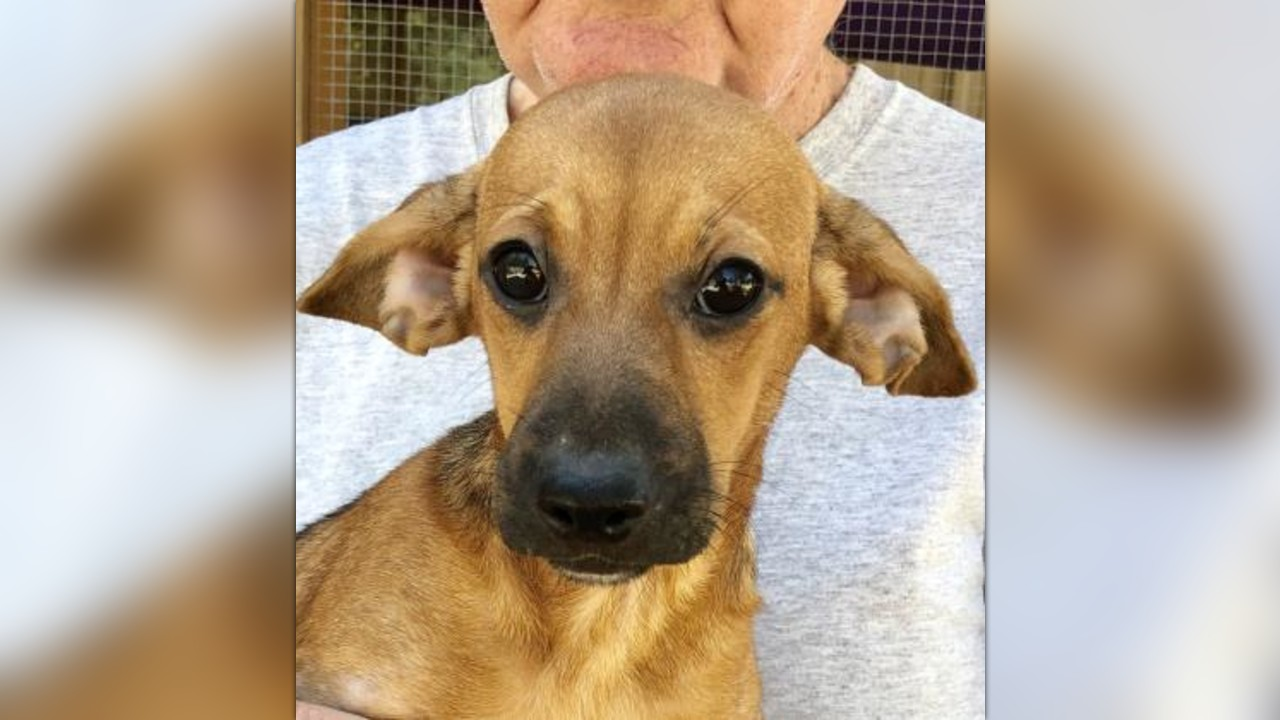 Scared 5 Month Old Puppy Urgently Needs Your Help! by Last ...