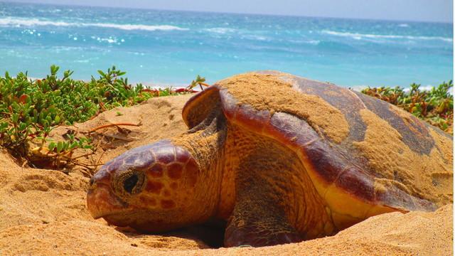 Finanzia una macchina per proteggere le tartarughe by sara for Tutto per le tartarughe