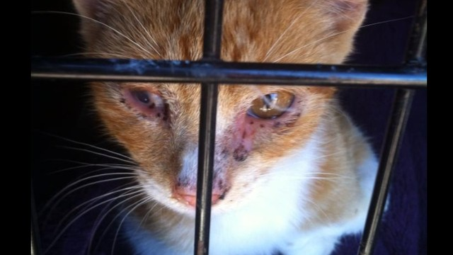 Fundraiser to help the abused cats of Homer, MI by Angela Gipson