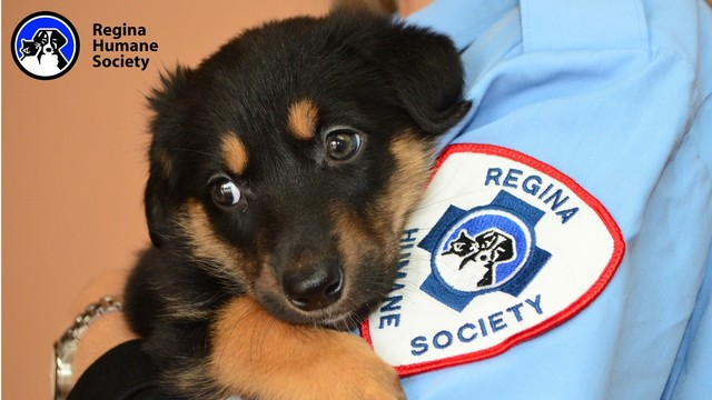 Help Homeless Animals at the Regina Humane Society by The