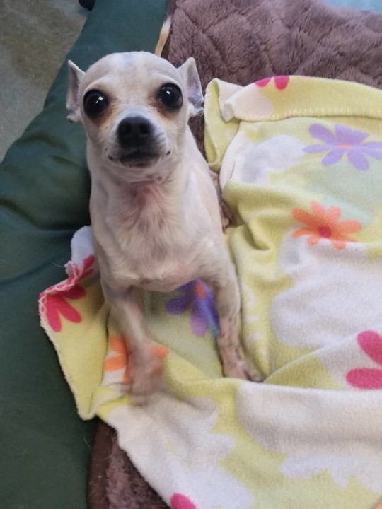Lucky Dog Rescue, Inc posted a story update on Tito Vet Fund for