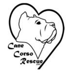 cane corso rescue austin tx