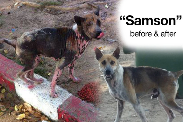 Samson Before & After