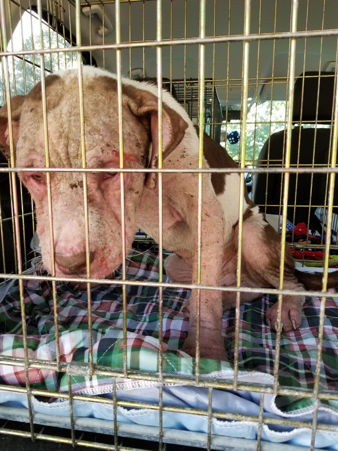 Severe mange and neglect.