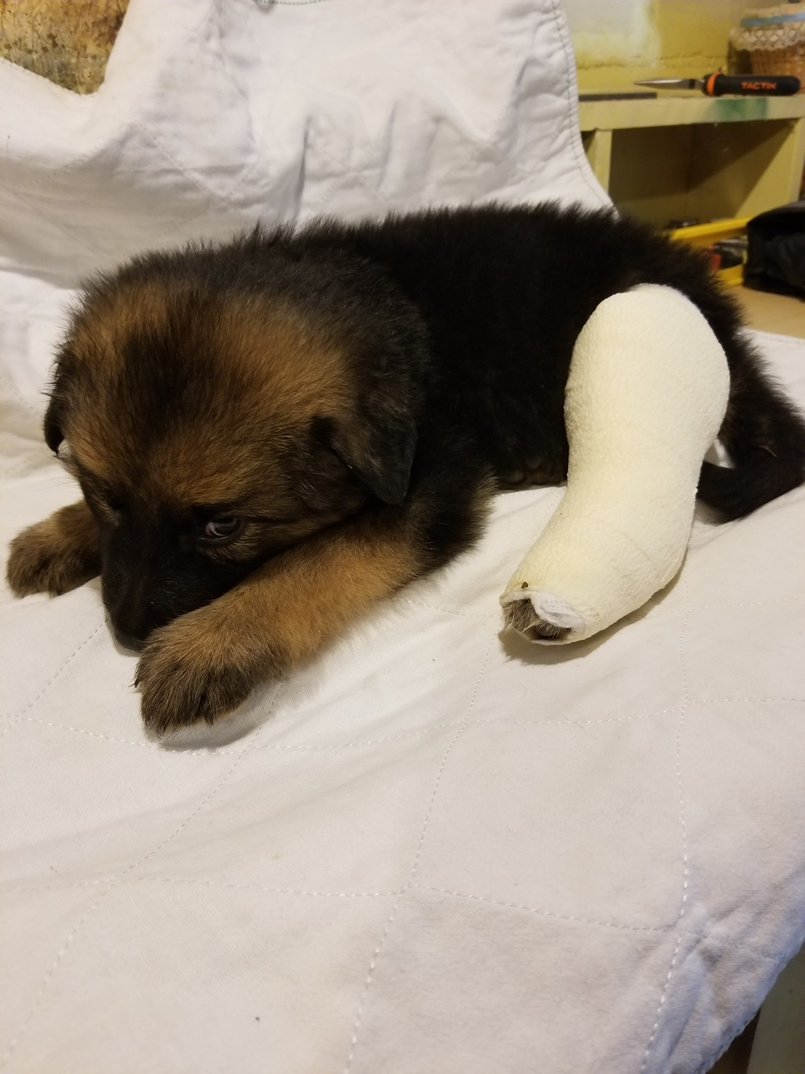 Six weeks old with a shattered leg.